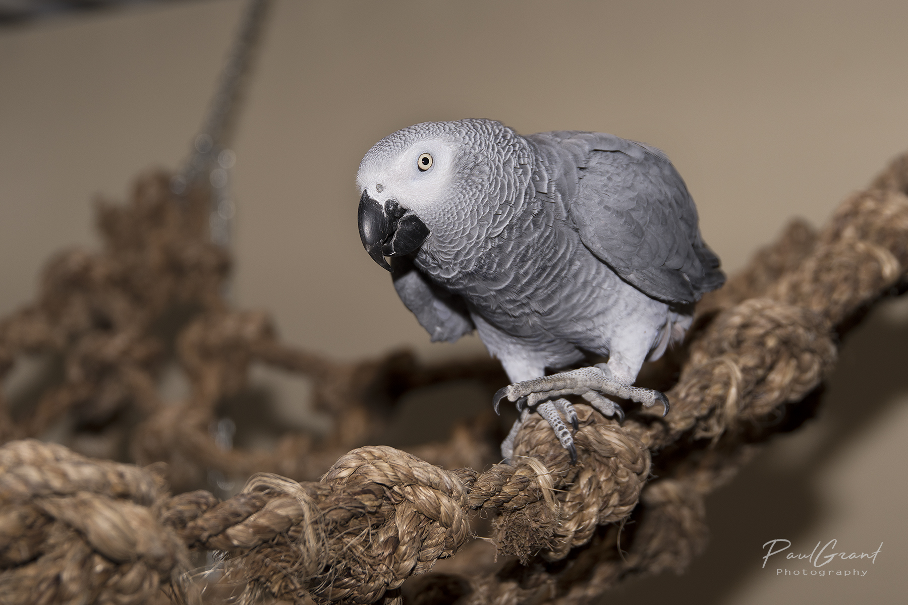 Parrot Boarding