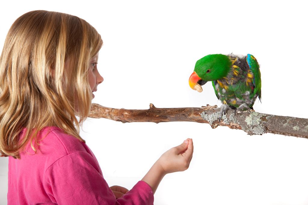 Parrot Parties